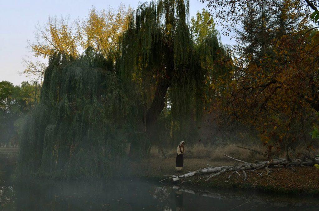 Willow_01.jpg