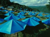 Umbrellas-1.jpg