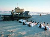 Leningrad-Cowboys-Go-America_02_800x529.jpg
