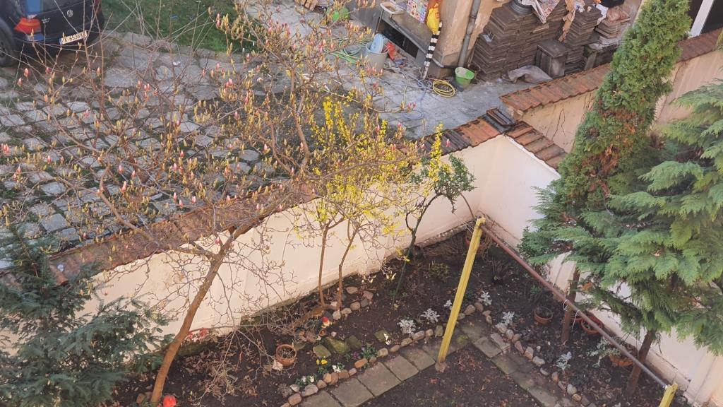 Kitas-magnolia02.jpg